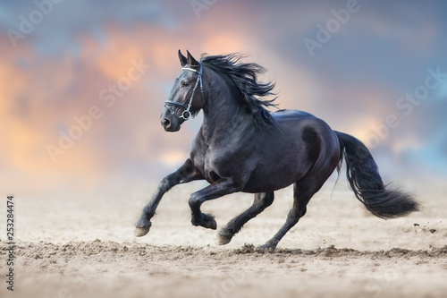 Fototapeta Beautiful frisian stallion run in sand against dramatic sky obraz
