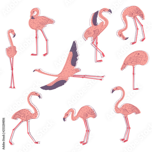 Canvas Prints Flamingo Bird Hand drawn vector set of pink flamingo in different poses. Exotic bird with long legs and neck. Wildlife theme