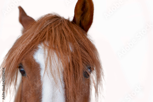 Red horse' half head isolated on a white background