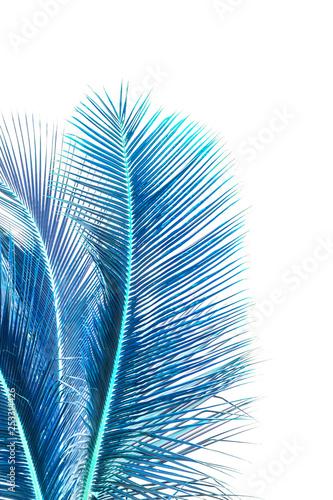Fotografia  Palmes bleues