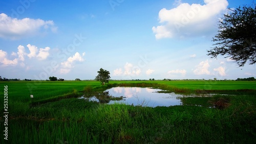 Fototapeta Green Paddy Rice Field with Cloudy Blue Sky in Countryside of Thailand obraz na płótnie