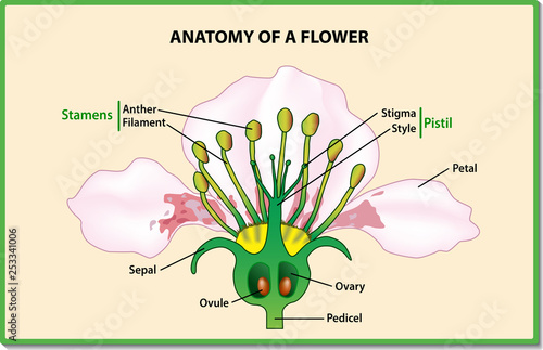 Anatomy Of A Flower Flower Parts Detailed Diagram With
