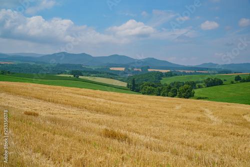 Fotobehang Weide, Moeras Nature landscape with blue sky and vegetable farm