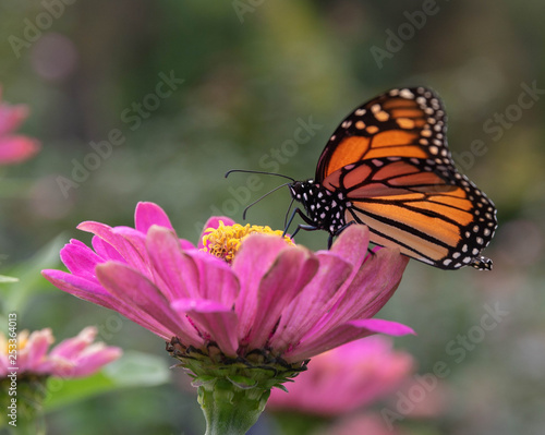 Butterfly and the Flower