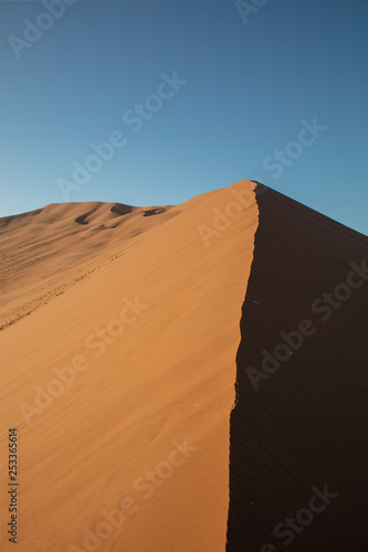 Poster Corail Dunes and Trees at Sossusvlei National Park, Namibia