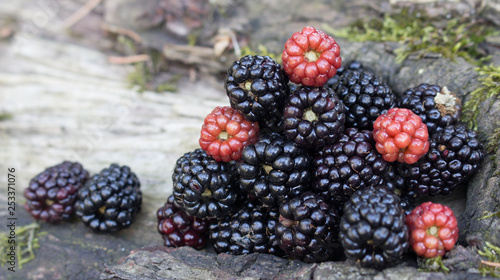 Fototapeta Benefits Of Blackberries For Hair And Health The fruit is deep purple in color with smooth, fragile skin