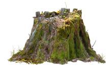 Old Tree Trunk. Dead Tree Isol...