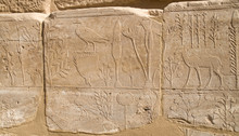 Wall With Carved Pictorial Catalog Of The Exotic Animals And Plants  From Asia In The Temple Of Karnak, Luxor