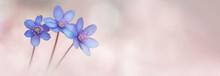 Frühlings Banner Mit Zarten L...