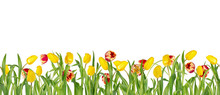 Beautiful Vivid Red And Yellow Tulips On Long Stems With Green Leaves In Seamless Border. Isolated On White Background. Bright Spring Flowers