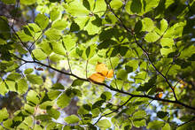 Close-up Of Trees Leaves In Fo...