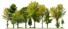 Green Trees Isolated On White ...