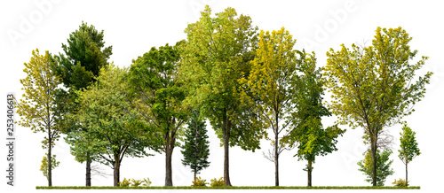 Poster Blanc Green trees isolated on white background. Forest and foliage in summer