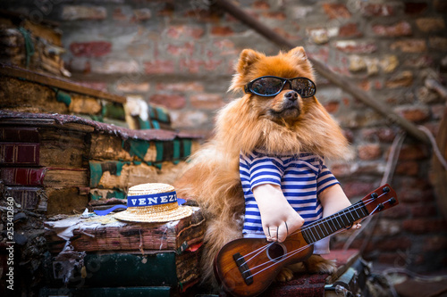 Canvastavla Spitz-Type Dog dressed as a gondolier in Venice, with guitar