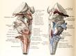 canvas print picture - 20190306 Antique Brain Medical Ilustrations circa 1896