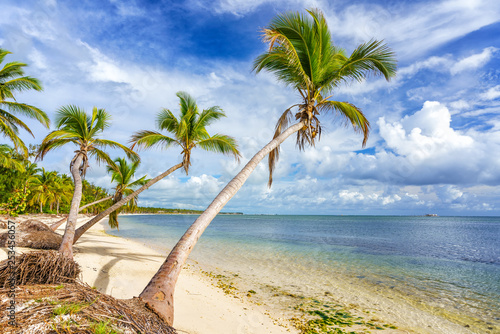 Stickers pour porte Pierre, Sable Palm trees on beautiful tropical sunny beach in Dominican republic