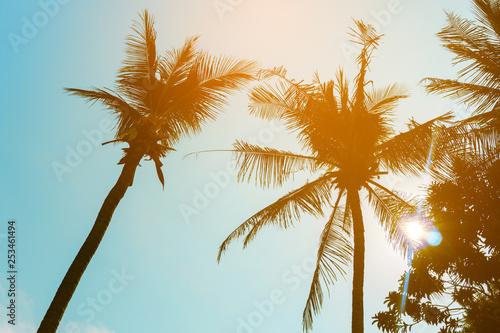 Photo  Coconut palm tree beach summer concept