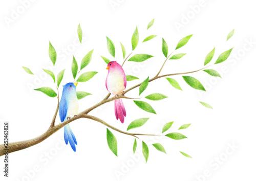 Fotografie, Obraz  木の枝と2羽の鳥