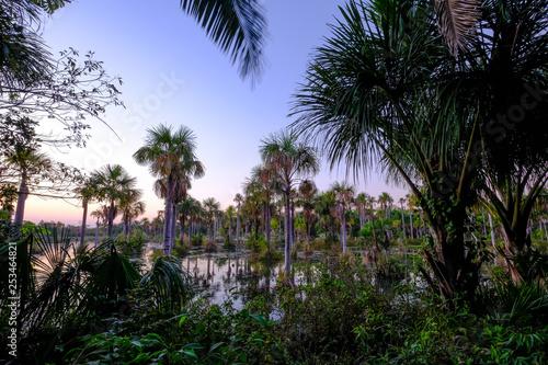 Fotografija  Palm trees in the lagoon Lagoa das Araras at sunrise, Bom Jardim, Mato Grosso, B