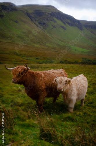 Recess Fitting Buffalo Ile de Skye, Ecosse