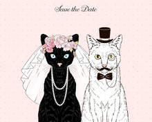 Black Cat Bride In Wedding Vei...