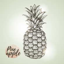 Realistic  Vintage Illustration Of Tropic Fruit Pineapple