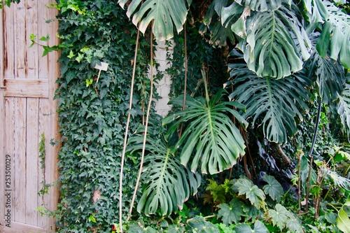 Garden Poster Roe Spring tropical garden