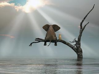 słoń i pies siedzą na drzewie uciekając przed powodzią