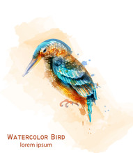 Kingfisher Bird Vector Watercolor. Colorful Tropic Bird Isolated On Whites