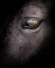 Horse Born to be free