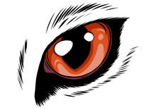 Orange Cat Eyes Isolated On White Background