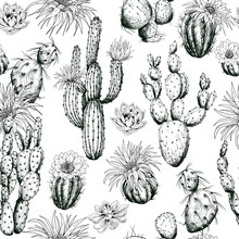 Seamless Pattern With Black And White Cactus Plants And Flowers. Hand Drawn Vector.
