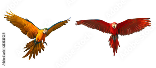 Colorful flying parrot isolated on white background. Canvas Print