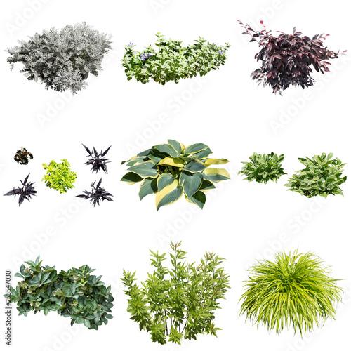 obraz lub plakat ガーデン植物素材