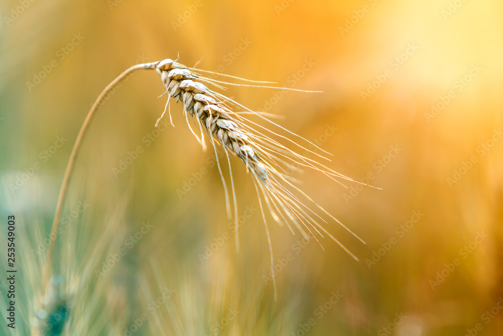 Photo Art Print Close Up Of Warm Colored Golden Yellow