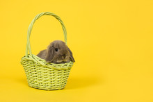 Adorbale Young Grey Rabbit In A Green Basket On A Yellow Background As A Concept For Easter