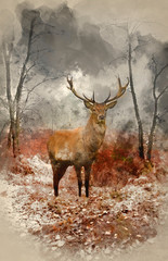 FototapetaWatercolour painting of Red deer stag in foggy misty Autumn forest landscape at dawn