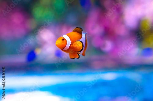 Findet Nemo Tablou Canvas