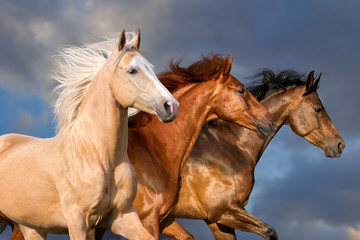 Three beautiful horse portrait in motion against sky
