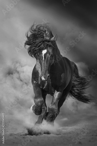 Fotografia Black stallion run on desert dust against dramatic background