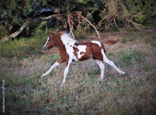 Fotografie, Obraz  Running Colt