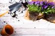 Sadzenie roślin, sezon ogrodniczy.