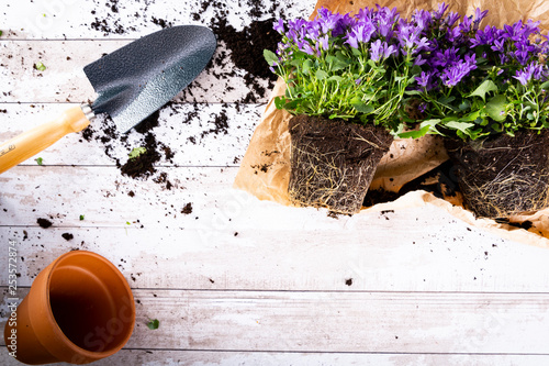 Fototapeta Sadzenie roślin, sezon ogrodniczy. obraz