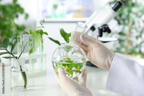 Fotografía  Lab assistant holding flask with leaves on blurred background, closeup