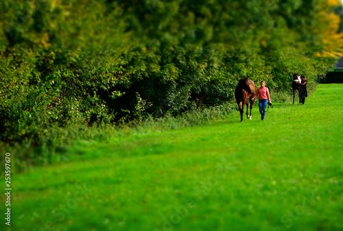 La pose en embrasure Equitation 緑の中の馬