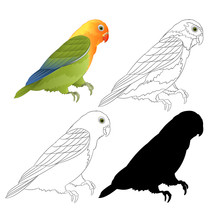 Agapornis Lovebird Parrot Trop...