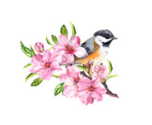 Spring Bird On Flowering Branch With Pink Flowers Of Cherry, Sakura, Apple, Almond Flowers . Water Color