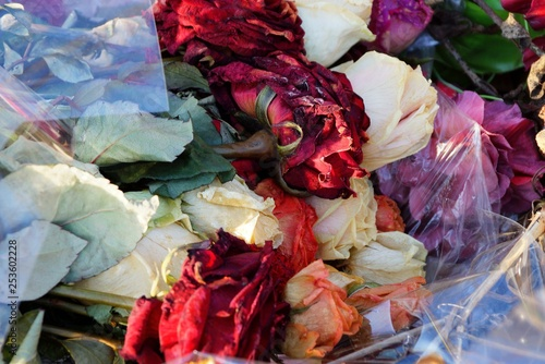 colored dry wilted flowers roses in a bouquet in cellophane in a pile of garbage