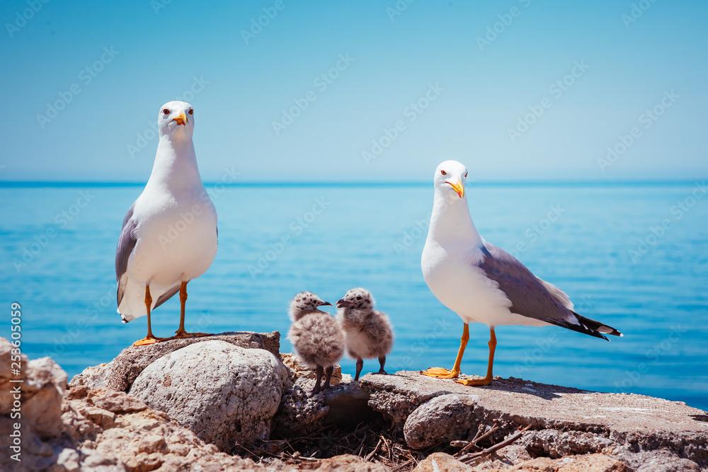 Bird's Nest on the Atlantic ocean. Unique pictures of wildlife.