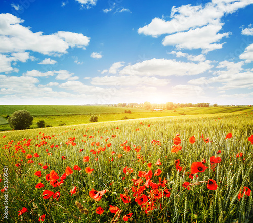 Obraz Captivating scene of the countryside with white fluffy clouds. - fototapety do salonu